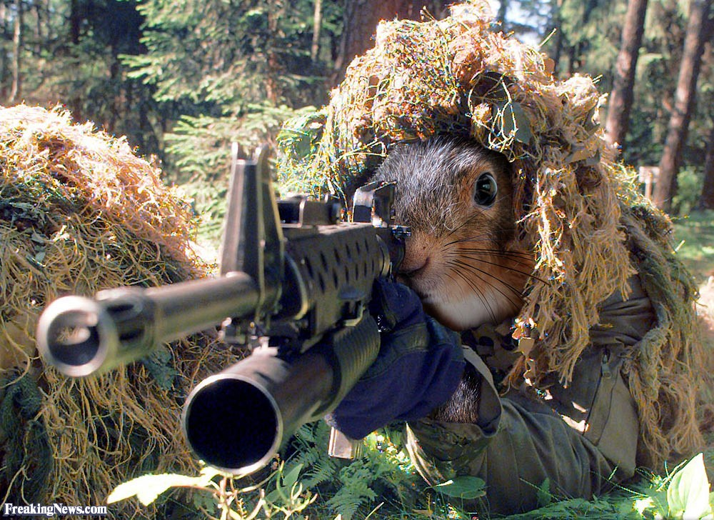 Special Forces Squirrel SFQC: watch this video just because