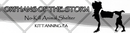 Orphans-of-the-Storm-Animal-Shelter
