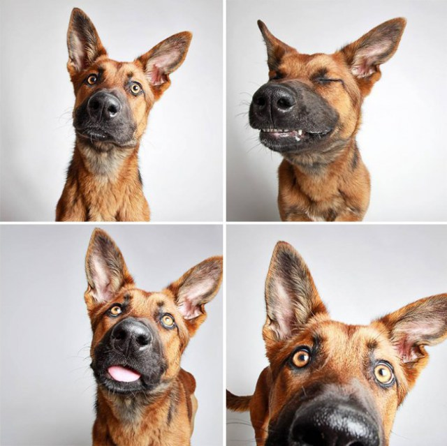 shelter-dogs-photo-booth_1